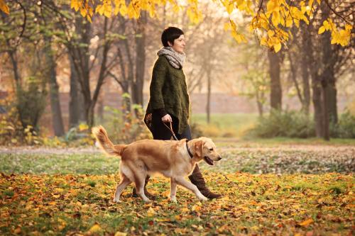 perro caminando