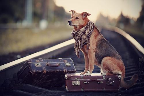 perro esperando dueño