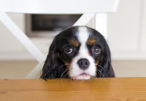 perro pidiendo comida