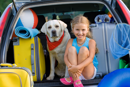 cachorro viaja de carro