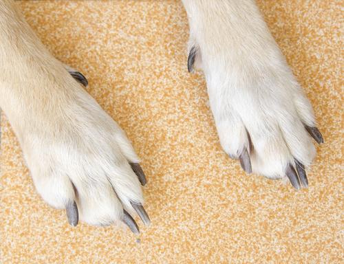 perros que arañan 2
