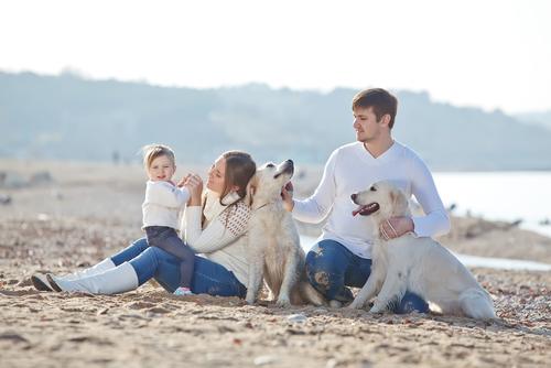 perros y familia