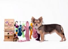 ropa de tu perro