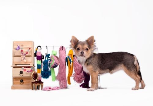 ¿Te atreves a confeccionar la ropa de tu perro?