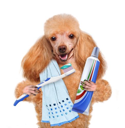 Vigila la salud dental de tu mascota