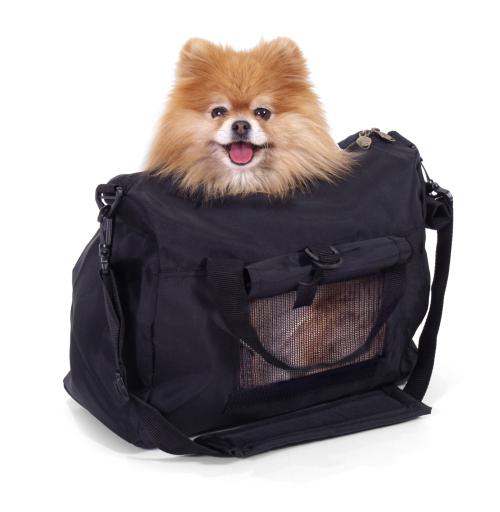Viajar en transporte público con mascotas
