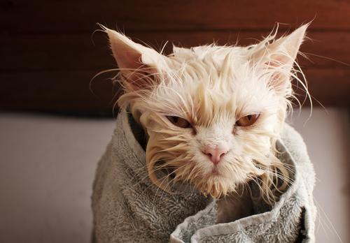 baño gatos 2
