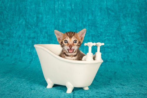 baño gatos 3