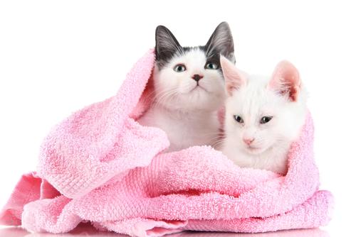 baño gatos