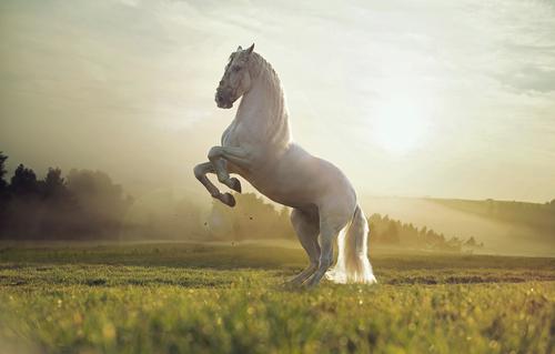 caballos 3