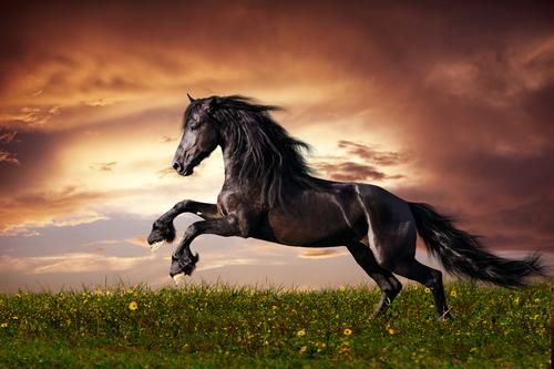 ¿Sabéis de dónde provienen los caballos?