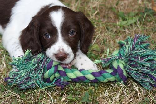 ¿Cómo es el séptimo mes del cachorro? — Mis animales
