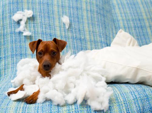cachorro inquieto 2