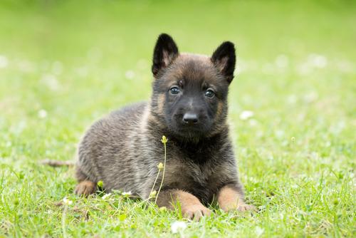 Cómo conseguir que tu perro obedezca a la orden de tumbado