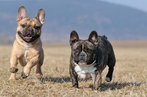 cachorros inquietos 3