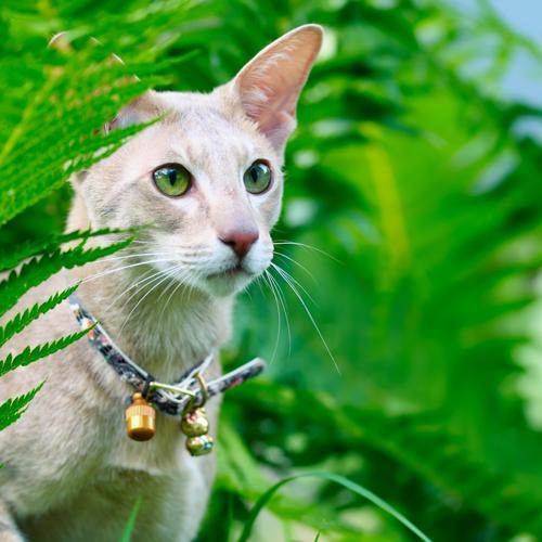 cascabel gato 3