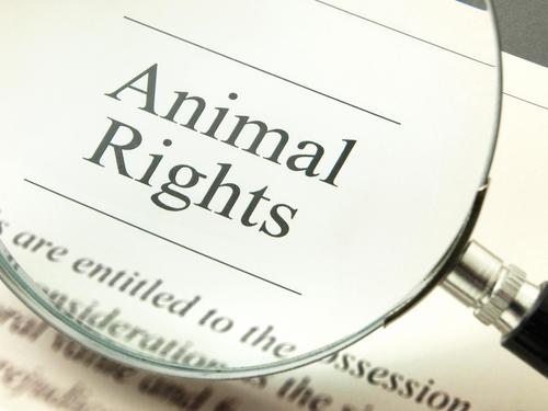 ¿Conoces la Declaración Universal de los Derechos del Animal?