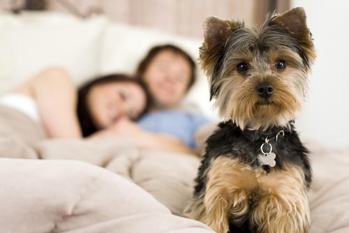 ¿Qué hacer con un cachorro que se porta mal por las noches?