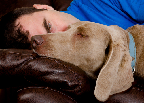 O sonho dos cães