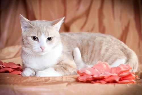 La edad de tu gato, trucos para adivinar cuántos años tiene