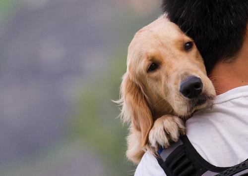 El Momento De La Despedida De Nuestra Mascota Mis Animales