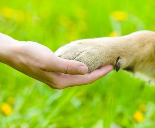 Cómo cortar los espolones de tu perro