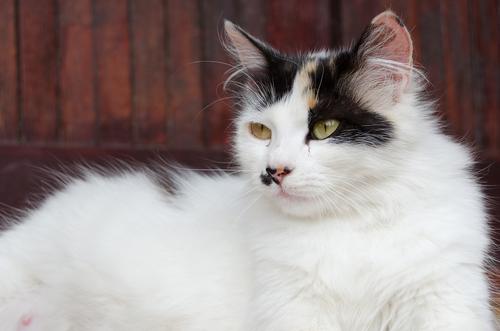 El instinto maternal de los gatos… ¿Cómo se comporta la futura mamá?