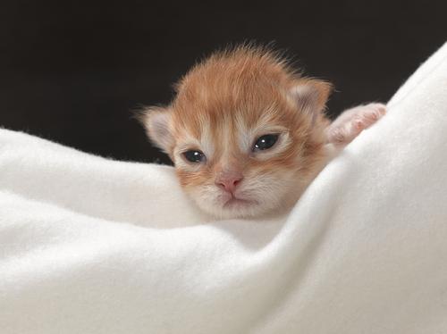 gatito manta