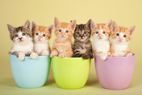 El significado del color de los gatos