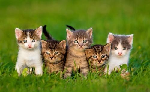 Quiero un gato, ¿cómo elegir un felino?