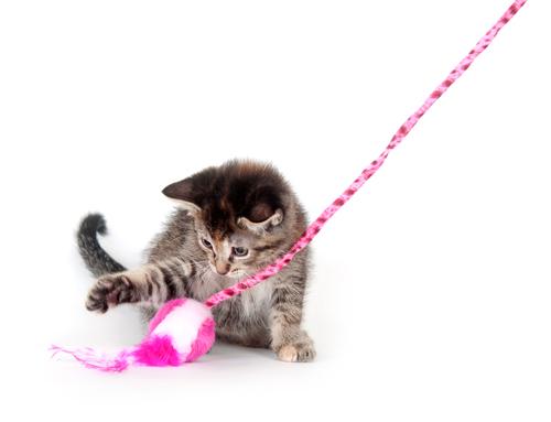 Cómo jugar con un gato. ¿Cuál es el juego o juguete favorito de tu mascota?