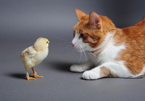 Gato y pájaro