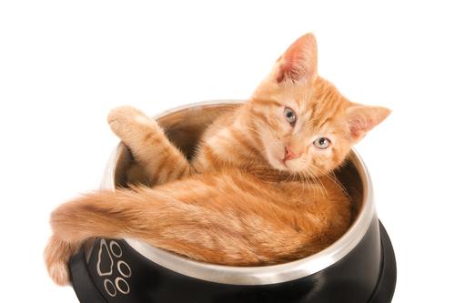 gato y plato
