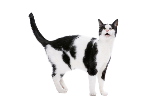 gatos y el sexo