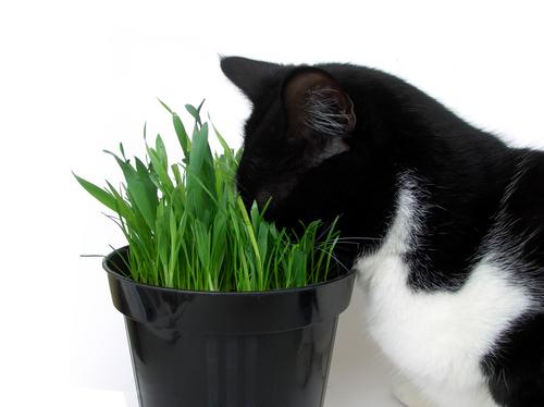 gatos y plantas toxicas 2