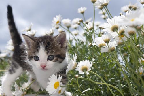 gatos y plantas toxicas 3