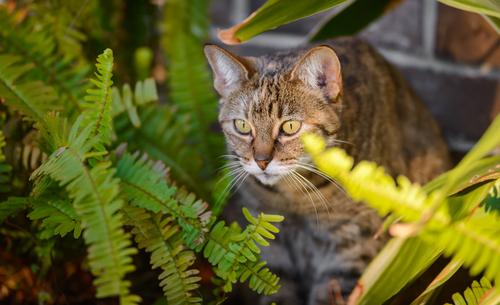 Gatos y plantas tóxicas