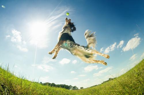 Cão brincando e pulando