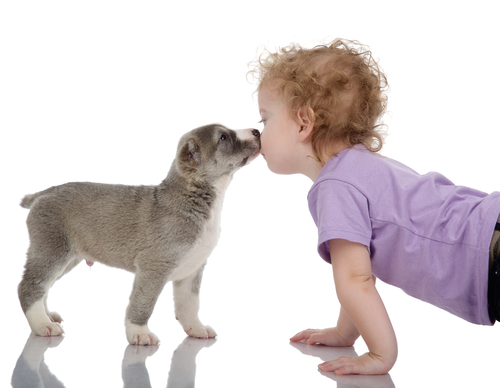 lenguetazo perro 3