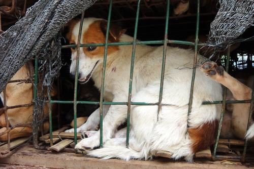 Maltrato a animales, síntoma de enfermedad mental