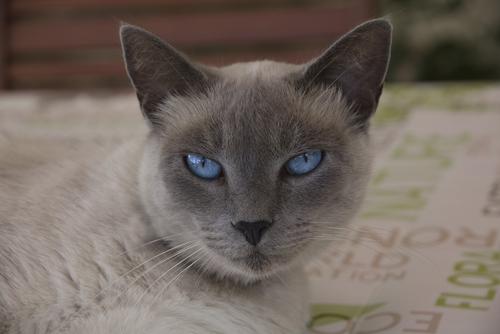 ojos de los gatos 2