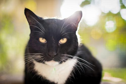 ojos gatos 3