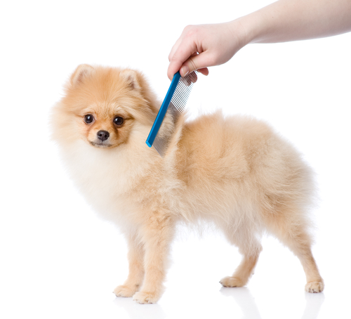 peinar a tu perro 3