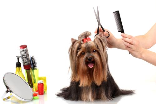 Cortando o pelo de um cão