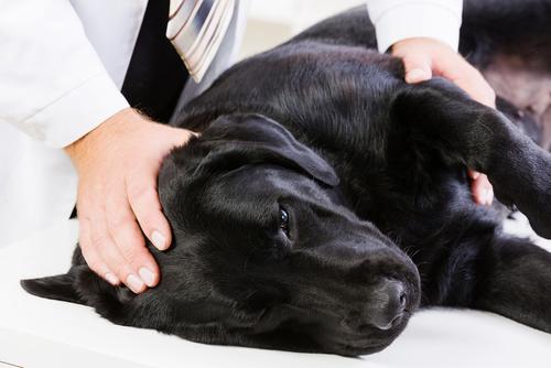 perro con artrosis 3