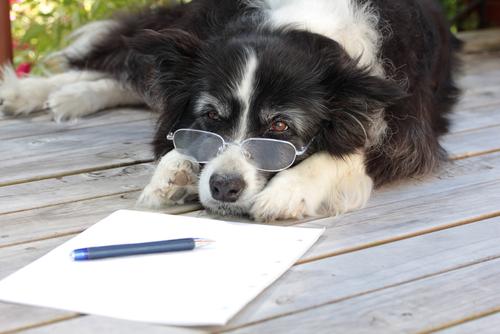 La artrosis canina: diagnóstico y tratamiento
