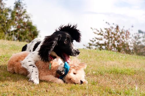 perro jugando 2