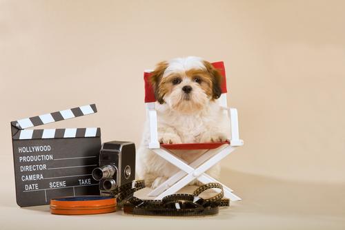 perro para television