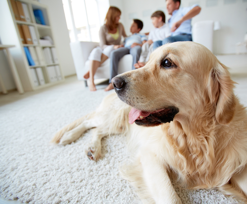 cachorro e família