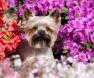 perro y jardin